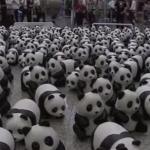 1600匹のパンダの香港ツアー