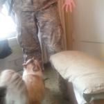 遠征から帰ってきた主人と久しぶりに再会する猫