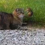 猫に捕らえられたシマリス、一瞬の隙をついて猛反撃