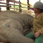 子守唄を聴きいびきを書きながら眠るタイの象