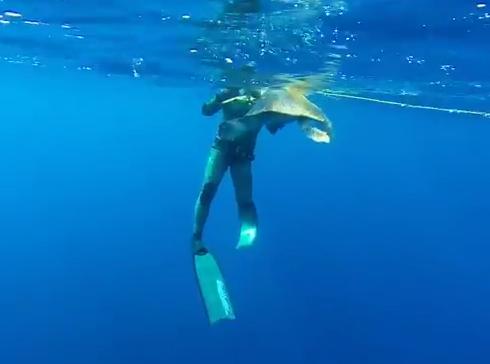 ブイのロープに絡まったウミガメを救出