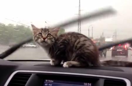 ワイパーの動きに反応して遊ぶ子猫