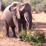 あまり象を怒らせないように…