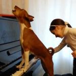 ピアノにあわせて歌うバセンジー