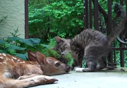 猫のちょっかいをシカトする鹿