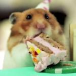 ネズミ仲間の誕生日パーティ