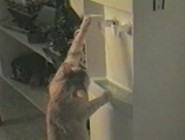 ウォーターサーバーを操作し水を飲むニャンコ