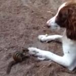 犬の足の上にあるピーナッツを盗むシマリス