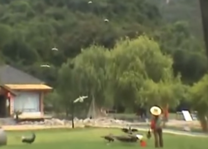 笛を吹いたら山から孔雀が舞い降りてきた!