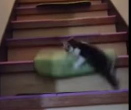 階段から転げ落ちる子猫