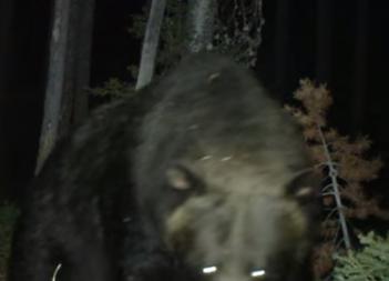 カメラに襲いかかる熊