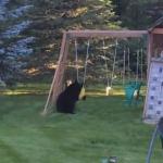 庭で楽しそうに遊ぶクマ、これは追い払えません