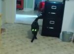 猫のモデルウォーキング