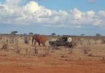 【感動!】レスキュー隊が象の親子の感動の再会に一役