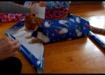 猫をクリスマスラッピング