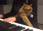 ピアノの練習の邪魔をするニャンコ