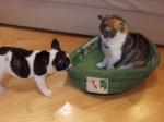 猫からベッドを奪い返したいワンコ