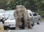 ゾウがお尻でメルセデス・ベンツを襲う衝撃映像