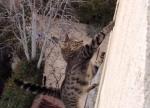 【猫凄い!】3階から落下したニャンコの運命は!?