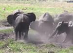 泥浴び中のゾウの群れ、抜け出せなくなった赤ちゃんを一斉救助