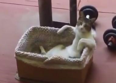 湯船につかる人のようにリラックスしているニャンコ