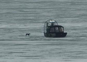 凍ったエリー湖の上を彷徨うワンコをプロペラボートで救出