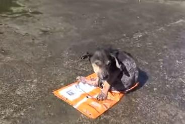 川に捨てられていたワンコを拾って幸せにする映像