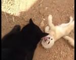 親友の猫と久しぶりに再会し喜ぶフェネック