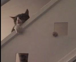 猫好きじゃなくてもニヤニヤしてしまう映像