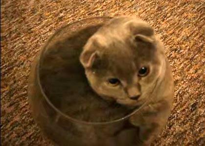 ネコは限りなく液体に近い生き物であることが判明