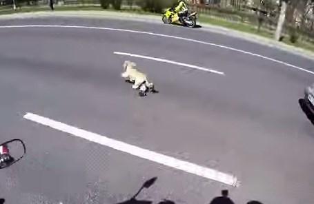 道路に逃げ出したワンコをバイク乗りが苦心の末に捕獲