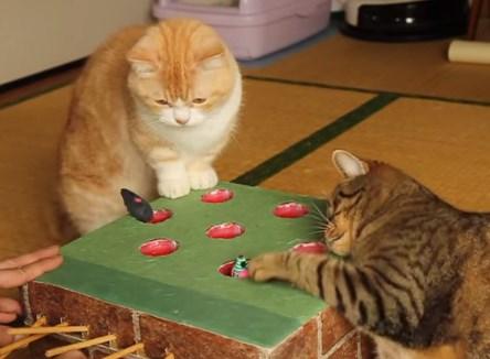 手作りのモグラたたきで遊ぶニャンコ