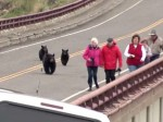 クマの親子が観光客らに大接近!