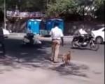 ワンコの道路横断をサポートしてくれたインド人
