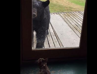 ネコ vs. クマ 猫のアタックにクマがビックリ