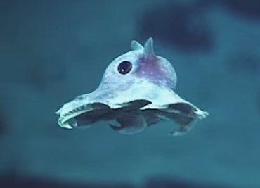 ここは宇宙?いえ、海の中です。海の中の不思議な生き物たちの映像