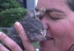 排水溝に流された子猫を女性が命をかけてレスキュー