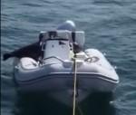 シャチの攻撃を恐れてボートに上るアザラシ