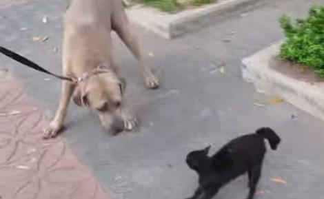 子猫に襲いかかった大型犬に母猫が猛烈なアタック
