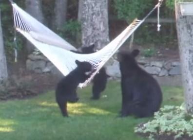 庭のハンモックで熊の親子がワイワイガヤガヤ