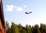 リスが建物の上から遠く離れた樹の枝に向かってジャンプ