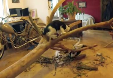 かわいい猫のためにDIYを頑張っちゃう飼い主さん