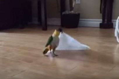 楽しそうにペーパータオルを折りたたむ鳥