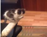 ジャンプにチャレンジする子猫、できるかな!?