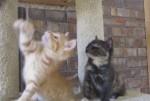 遊ぶ猫と眠る猫