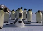 ペンギンロボにカメラを仕込んで皇帝ペンギンを撮影