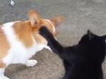 黒猫がコーギーに大量の猫パンチ