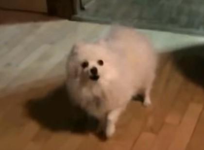 犬のワン!を376,572,715,308回聞くことができる動画