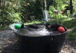 小さなプールではしゃぐクマの映像