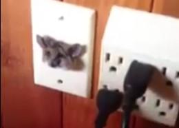 テレビコンセント引っかかってしまったネズミを救出